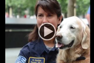 Cadela que auxiliou no resgate do 11 de Setembro ganha 'honras de heroína'