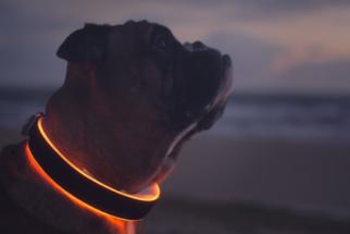 Coleira 'inteligente' garante rastrear a vida do cachorro em tempo real