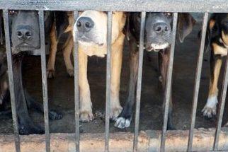 Deputados aprovam projeto para controle de cães e gatos no MS