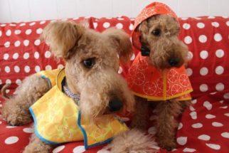 15 produtos adoráveis que todo cão e seu dono devem ter