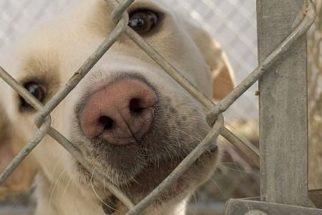 Documentação necessária para a compra de um cão