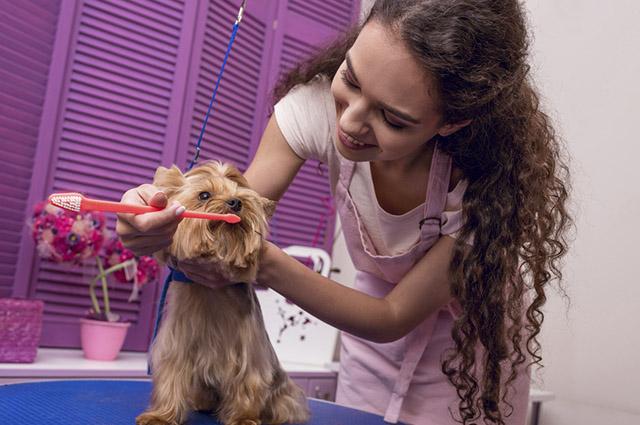 Para conseguir escovar os dentes do seu cachorro corretamente acostume-o desde filhote