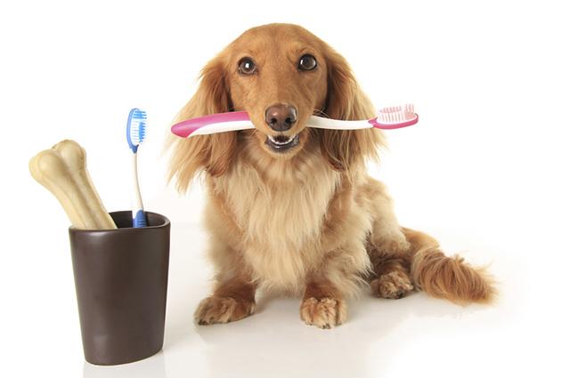 Para escovar os dentes do seu cachorro corretamente faça movimentos circulares com a escova