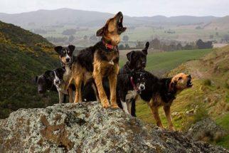 Fotógrafo faz ensaio incrível com cães de trabalho