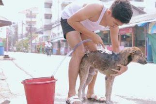 Homem decide dar banho em cachorros de rua na Tailândia