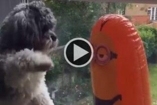 Minions comprovam que são 'maus' ao bater em cão indefeso