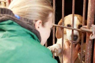 ONG compra cachorros que seriam abatidos na Coreia do Sul
