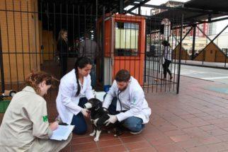 Prefeitura de Curitiba cria projeto de adoção comunitária