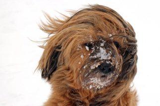 Queda dos pelos dos cachorros: causas e tratamentos