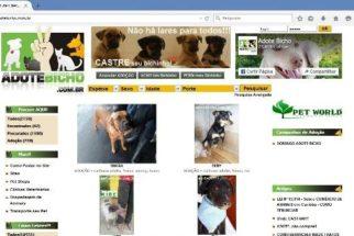 Saiba como divulgar na web animais para adoção, perdidos e/ou achados