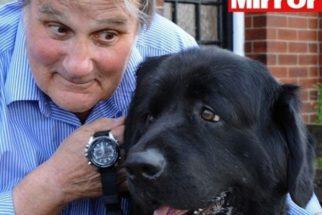 Saiba porque seu cão parece saber as horas