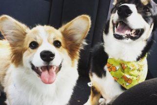 20 cachorrinhos felizes para quem está triste