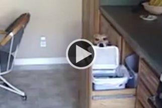 Vídeo: confira a ação de espertos cães 'roubando' comidas