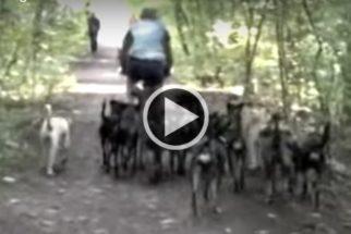 Vídeo: Homem consegue controlar 16 cães de uma vez