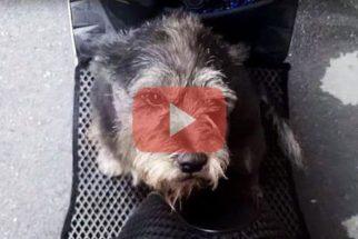 Vídeo: emocionante o reencontro de dono e cadelinha após seis dias separados