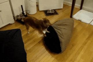 12 cãezinhos que acharam um lugar melhor pra suas camas
