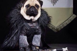 15 cães com incríveis modelos de fantasias para Halloween