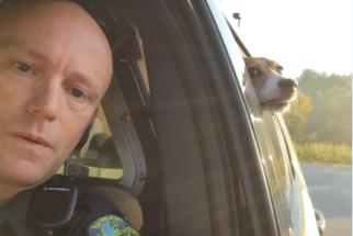 Após 'invadir' selfie de policial, cãozinho faz sucesso na web