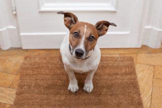 Aprenda dicas de como criar o cão em apartamento