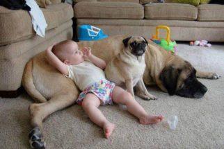 19 fotos que confirmam que os cães são os melhores amigos de bebês e crianças