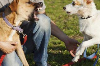 Cachorro ciumento: como lidar com esse comportamento?