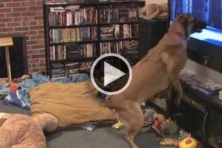 Cachorro fica eufórico ao ver filme 'Bolt: Supercão'