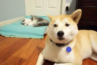14 cães que tiveram que dividir suas camas com gatos