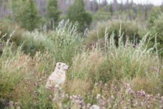 Cachorro volta para casa após 60 dias perdido em floresta