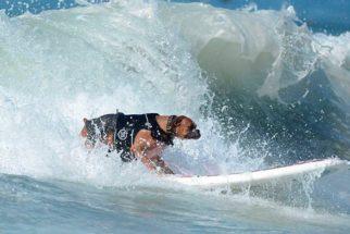 Campeonato de surf canino arrecada fundos em prol de animais