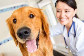 Cientistas criam anticoncepcional de baixo custo para cães