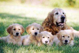 Como cruzar seu cachorro? Veja dicas e cuidados