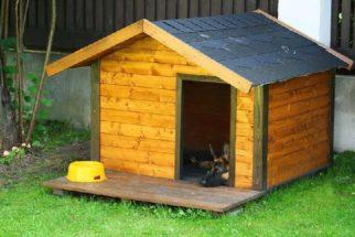 Como escolher uma casinha para o cachorro?
