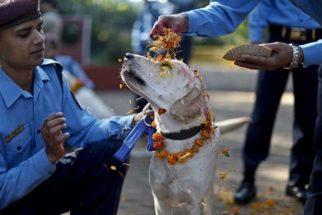 Festival nepalês homenageia cães por lealdade e amizade