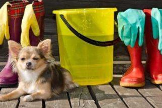 Dicas de limpeza para casa onde há cães