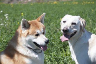 Estudo indica que cães surgiram na Ásia Central
