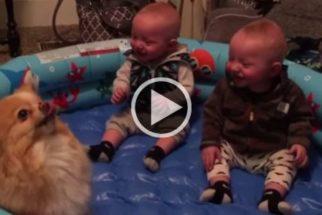 Hilário: gêmeos caem na gargalhada com cão dando pulos