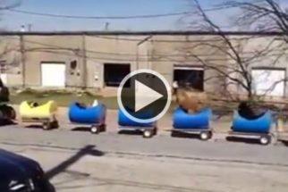 Homem constrói 'trenzinho' para passear com cães abandonados