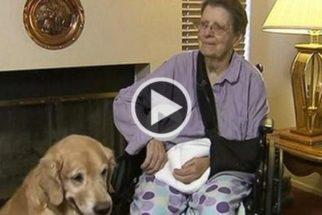 Idosa tem crise de Parkinson e sobrevive 48h na companhia de cães