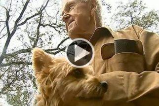 Idoso preso em inundação recusa socorro para não abandonar cadela