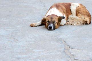 O cão deve dormir dentro ou fora de casa?