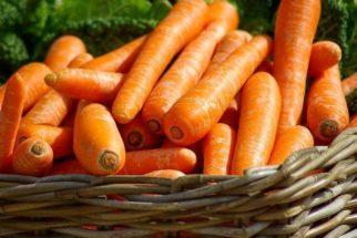 Os efeitos benéficos da cenoura para a visão e saúde dos cães