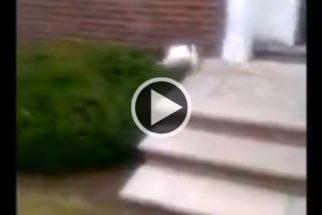 Para sair de casa, cão evita descer escada e dá pulo 'kamikase'