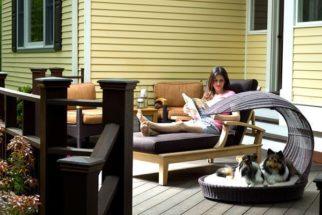 Quer ter um cão? Aprenda dicas para convencer as pessoas de sua casa