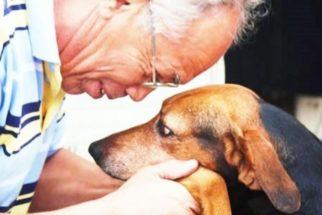 Raças de cães para idosos