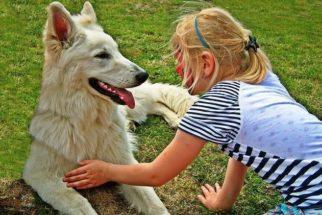 Raças de cães que convivem bem com crianças