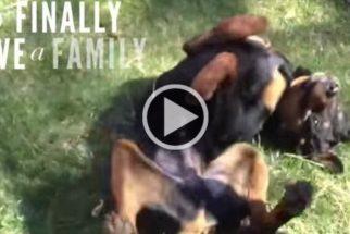 Veja a incrível reação de cãezinhos ao saber que foram adotados