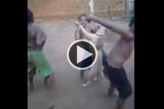 Vídeo: Cão dançando forró com crianças ganha a web