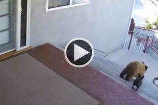 Vídeo de cão expulsando ursos de casa vira sucesso na internet