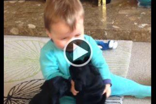 Vídeo: pugs 'atacam' bebê com várias lambidas de carinho