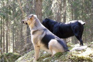 4 histórias de cachorros que vão te emocionar
